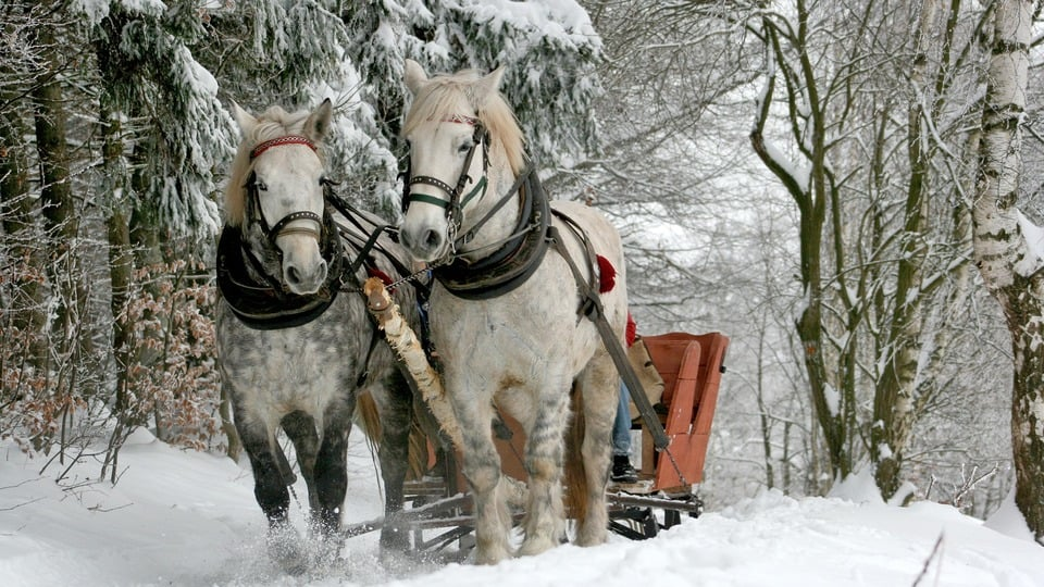 Horse-drawn sledge ride